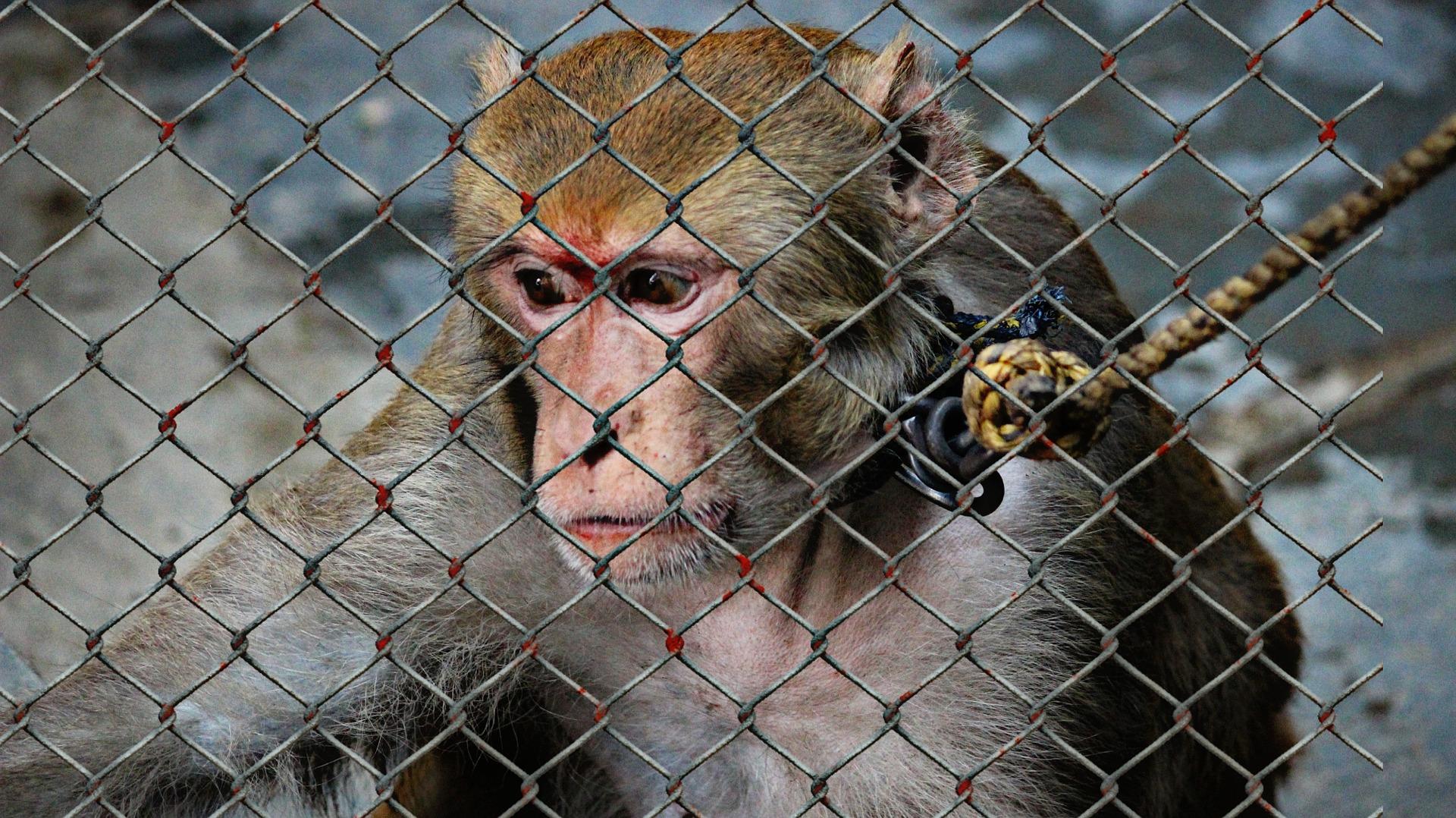 Človek vs zviera: Trpia zvieratá v zajatí?