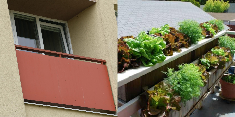 Tvoj balkón či parapeta nemusí vyzerať takto. Čo sa dá na jar vypestovať na intráku?