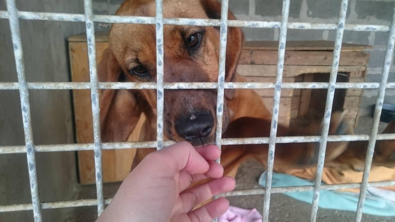 Všetko, čo potrebujete vedieť o živote psov v útulkoch