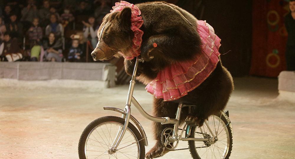 trpia zvierata v cirkuse