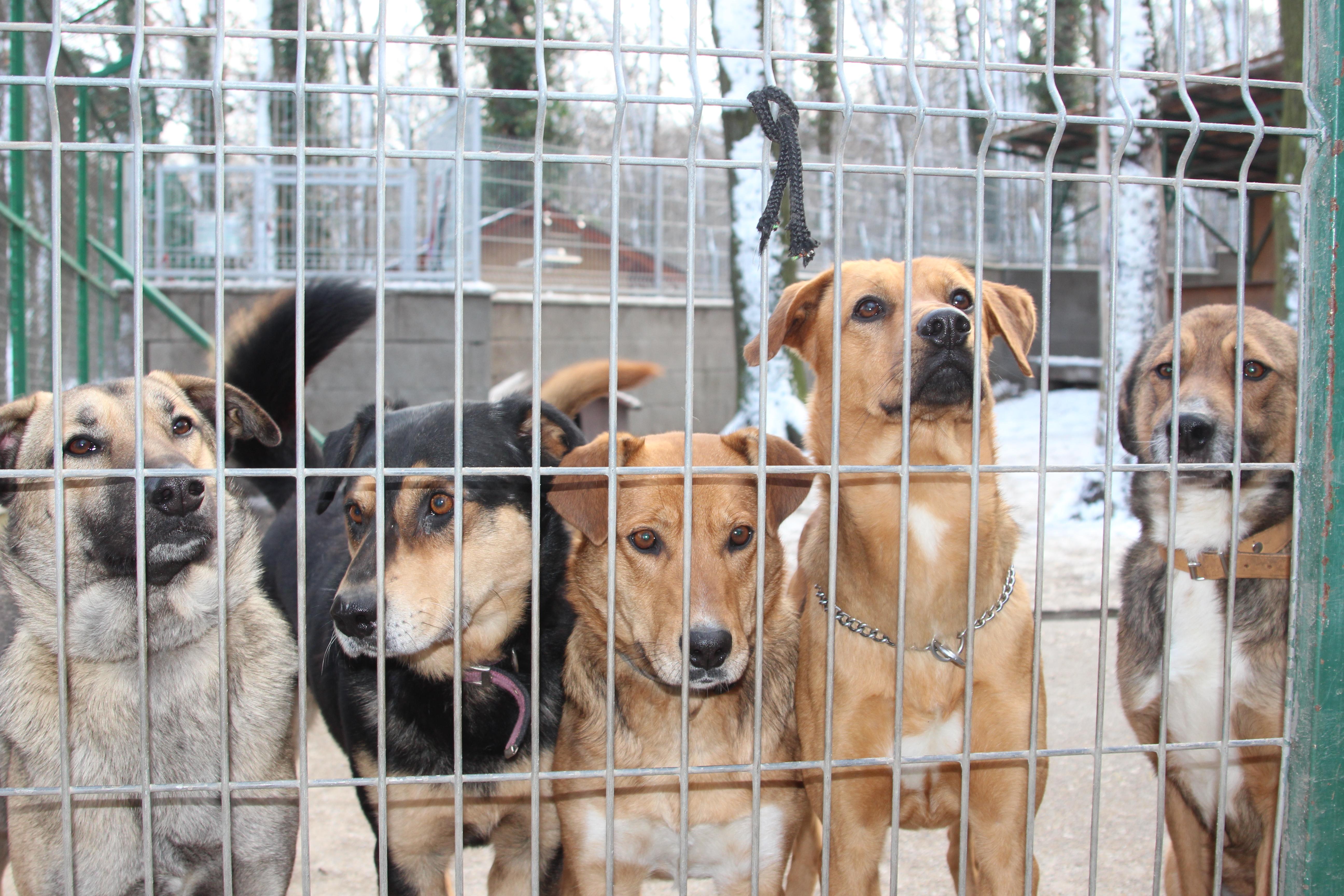 ako adoptovať psa