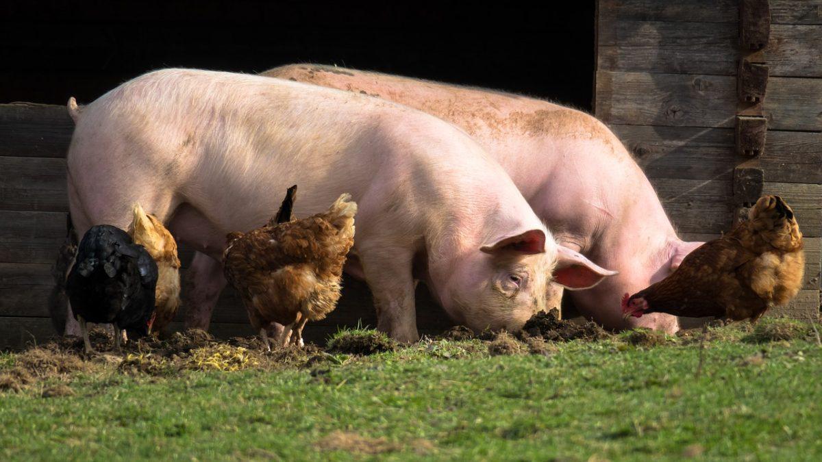 6 dôvodov, prečo by si mal obmedziť konzumáciu mäsa